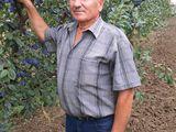 Pomi altoiti fructiferi  - 2018-2019
