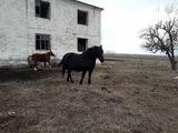 куплю коров и овец лошадей и бычков....