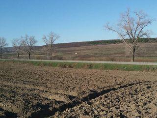 20 arii de pamânt arabil în spre Vatra, Chisinau