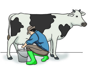 Покупаем коровье молоко 6-00 лей за литр база 3,5% жирность