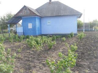 Vind casa in satul Chetrosu raionul Drochia