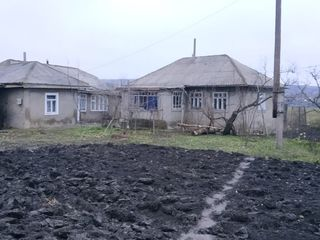 Продаю дом в г. Сынжерей. Vind casa in or. Sîngerei (Lazovsk)
