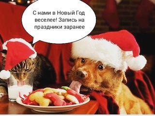 """Домашняя гостиница для животных """"Анастасия"""" передержка, выгул!"""