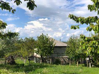 Участок в 12 соток в лесу (между Пересечина и Иванчя)