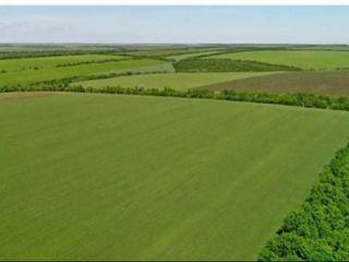 Cumpăr teren agricol.