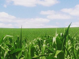 Долгосрочная аренда земельных участков под сельское хозяйство