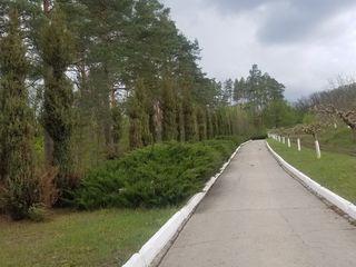 Ореховый сад,напротив Заповедника,возможно АгроТуризм Меняю