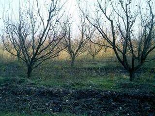 Teren pentru vilă 2500 euro Onitcani Criuleni
