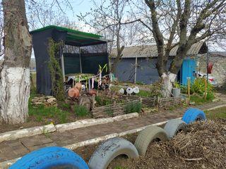 Vilă/grădină în Criuleni