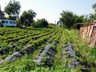 17  соток земли(под строительство) недалеко от центра в коммуне Гратиешты