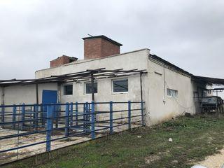 Se vinde complex agroindustrial (abator), amplasat în satul Mihăileni, r-nul. Rîşcani!