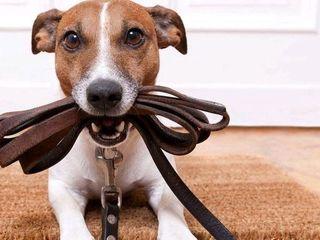 Выгул собак  любых размеров по Ботанике.