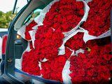 Trandafiri ,surprize la usa ta !!
