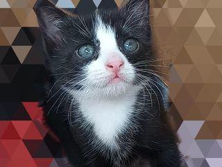 Черный и чёрно-белый котята:) В любящие руки!