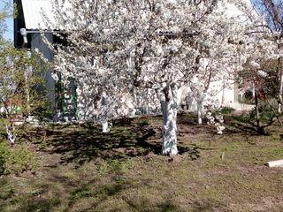 Дом дача Кишинев, Ботаника, пгт.Сынжера
