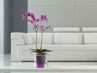 Декоративные кашпо и горшки для орхидей, супер легкий полив!