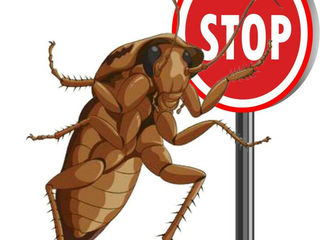 Истребление тараканов