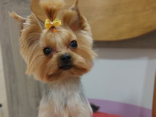 """Frezura  câini şi pisici în salonul """"Mako"""""""