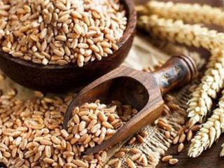 Cumparam cereale in cantitati de la 20 de tone
