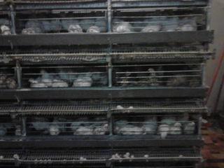 Клеточные батареи (заводские) для выращивания перепелов идр. оборудование.
