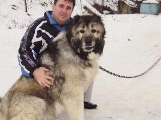 Корм для собак 10,0 лей/кг