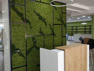 muschi decorativ Moldova, стабилизированный мох, вертикальное озеленение, gradini verticale moldova