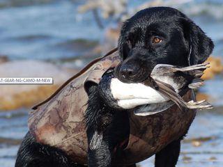 Жилет для охотничьих собак 2XL Avery Dog Parka.