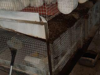 Cusca pentru iepuri in 2 nivele 2000 lei