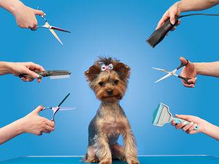 Профессиональные стрижки собак,кошек,кроликов