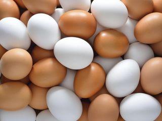 Инкубация яиц.