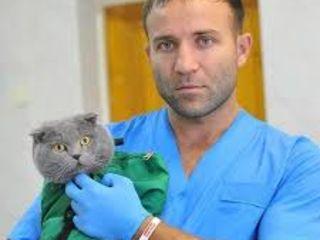 Veterinar pentru Animale Domestice pentru informații suplimentare apelați