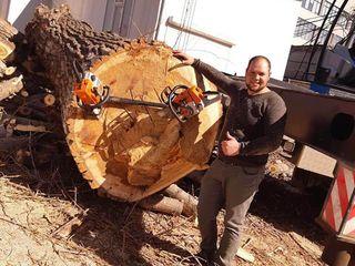 Taierea copacilor cu Alpinisti sau Autoturn.Taierea si despicarea lemnelor. Calitatea 110%