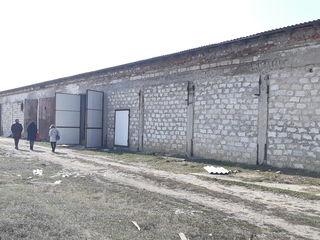 Încăperi de producere cu frigider si teren aferent sat. Tomai