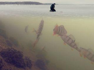 Articole de pescuit asortiment m.Balti