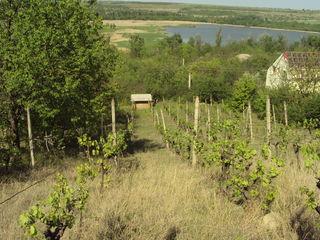 Резены участок  12  соток  возле озера пятихатка