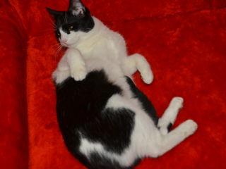 Дарю шикарную котика Тофика.