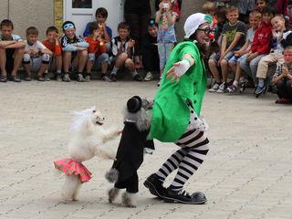 Супер шоу дрессированных собачек!