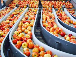 Oferim servicii de spălare și sortare a mărului / предлагаем услуги сортировки и мойки яблок