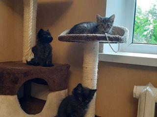 Pisici / Кошки