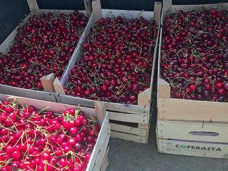 Cumpăr fructe la prelucrare