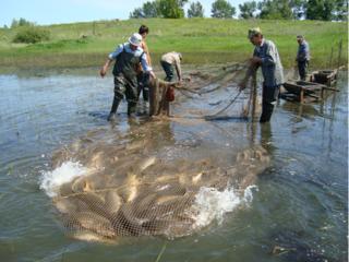 Услуга по отлову рыбы