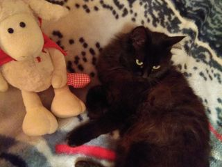 S-a pierdut pisica neagra, sos Balcani