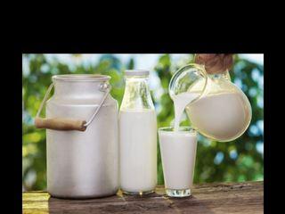 Vind lapte capra cu oaie 10 lei litru