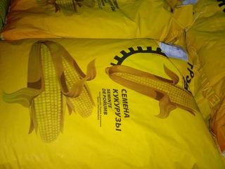 Reducere seminte de porumb Răuțel / семена кукурузы