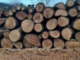 vînd lemne de lemn de foc