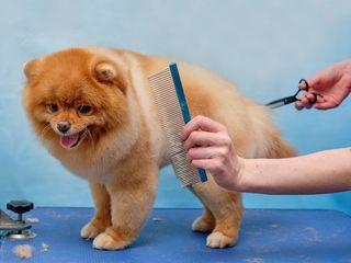 Arlechino Grooming Studio. Buiucani. Îngrijirea căinilor și a pisicilor.