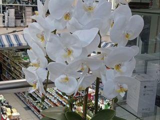 Искусственная  орхидея для домашнего и офисного декора 450лей.
