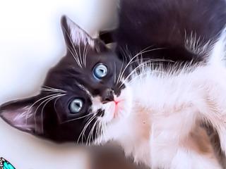 Порадуйте родных и близких милейшими котятами!!!