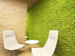 вертикальное озеленнение,  gradini verticale, мох стабилизированный, muschi decorativi, licheni