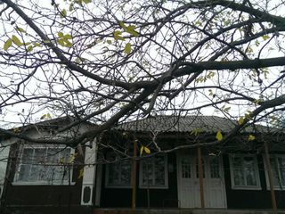 Vind casa de locuit in satul Pirlita.
